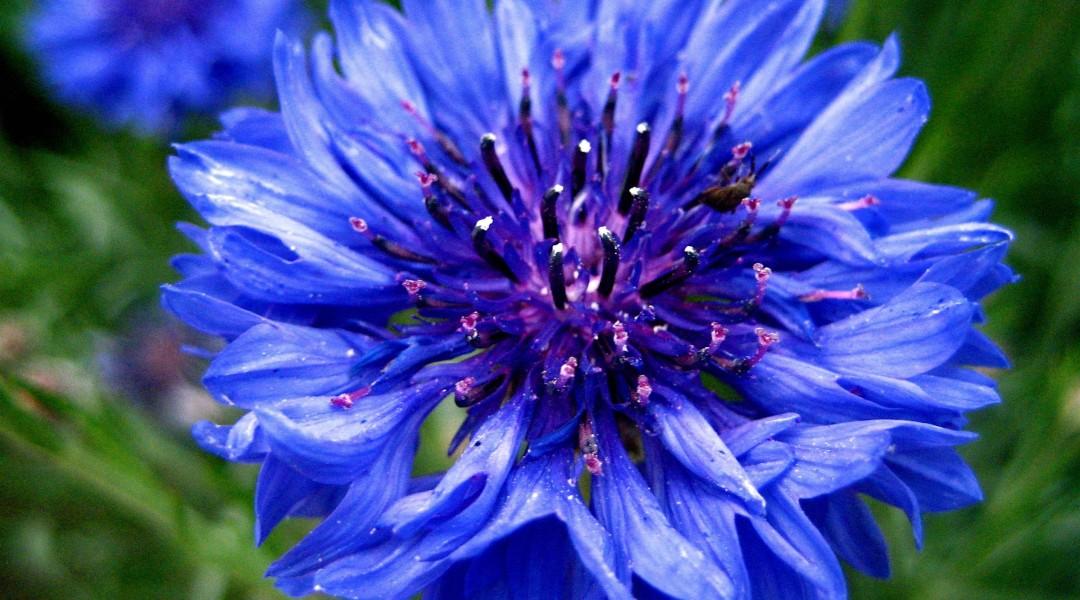fiore erbavoglio