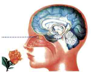 Immagine Aromaterapia grande 3