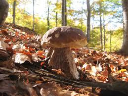 funghi-2