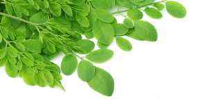 Moringa+New+Zealand+Moringa+Leaves