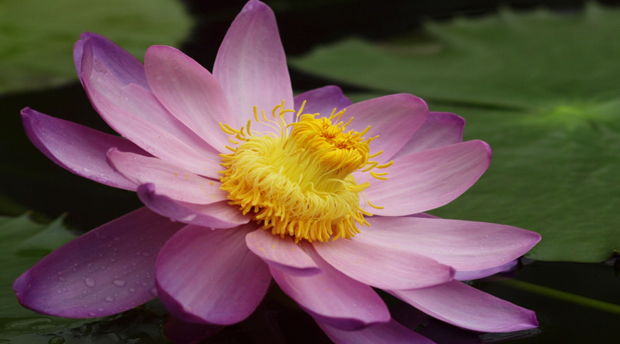 loto erbavoglio